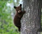 Filhote de urso marrom escala uma árvore