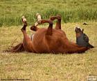 Cavalo chafurdar