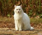 Gato branco sentado