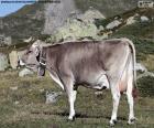 Vaca no alto das montanhas