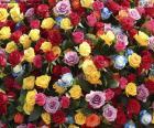 As rosas são flores com mais significados, o significado das rosas varia de acordo com sua cor