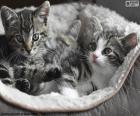 Dois gatinhos fofos