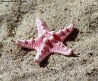 Linda estrela do mar