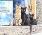 Três gatos na porta de uma casa velha