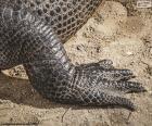Pé de crocodilo