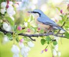 Pássaro azul celeste