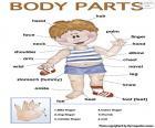 Partes do corpo em inglês