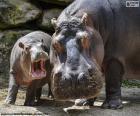 Hipopótamo ao lado de sua criação