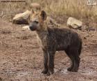 Filhote de hiena