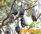 Dia da Apreciação do Morcego