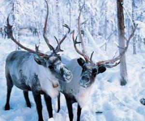 Puzle Renas de Natal na floresta