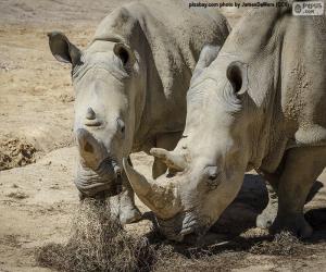 Puzle Rinoceronte de comer