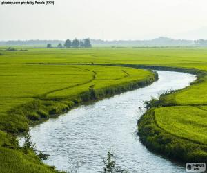 Puzle Rio entre campos de arroz