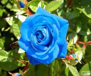 Puzle Rosa azul