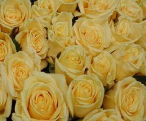 Puzle Rosas amarelas abertas