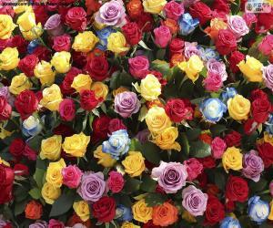 Puzle Rosas coloridas
