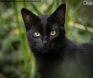 Puzle Rosto de gato preto