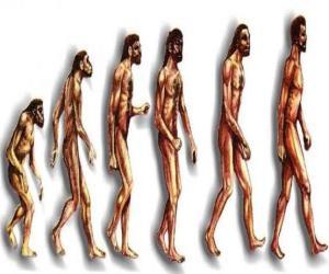 Puzle Sequência da evolução humana a partir do australopithecus Lucy para o homem moderno passando entre outros por homens de Heidelberg, Pequim, Neanderthal e Cromagnon