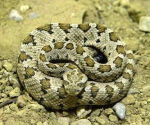Puzle Serpente enrolada
