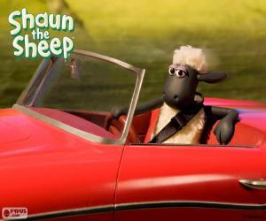 Puzle Shaun dirigindo um carro
