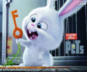 Puzle Snowball, um coelho branco