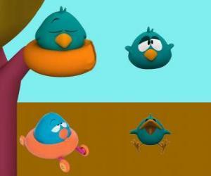 Puzle Sonequita ou Ave dorminhoca é uma ave muito sonolenta e chorosa