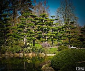 Puzle Sugi ou cedro japonês