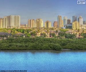 Puzle Tampa, Estados Unidos