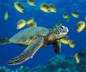 Puzle Tartaruga marinha