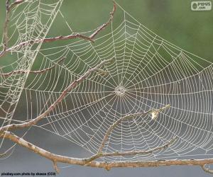 Puzle Teia de aranha