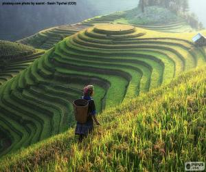 Puzle Terraços de arroz, Tailândia