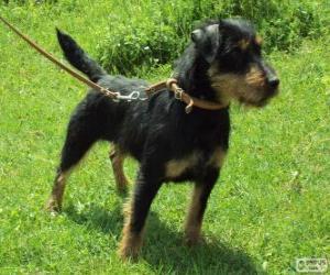 Puzle Terrier alemão de caça