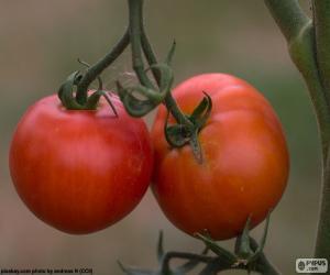 Puzle Tomates