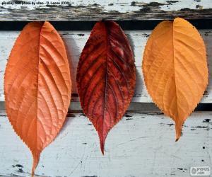Puzle Três folhas de outono