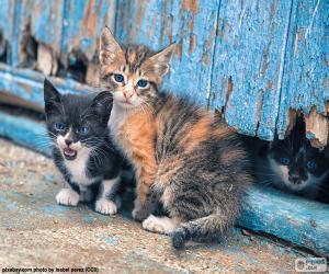 Puzle Três gatinhos