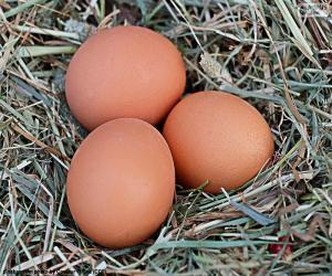Puzle Três ovos