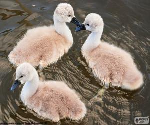 Puzle Três pequenos cisnes