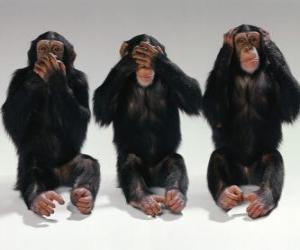 Puzle Três macacos pequenos se sentaram no chão