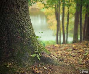 Puzle Tronco de árvore