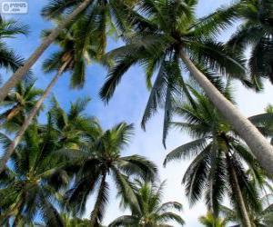 Puzle Tropical palms