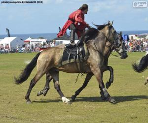 Puzle Truques de equitação