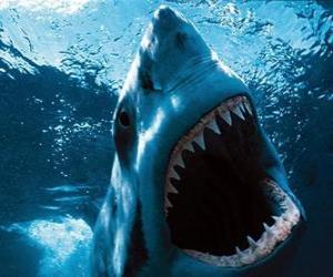 Puzle Tubarão