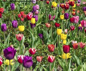 Puzle Tulips