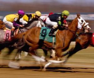 Puzle Turfe - Corrida de cavalos no hipódromo