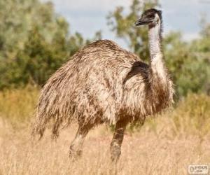 Puzle Uem a segunda maior ave