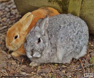 Puzle Um casal de coelhos