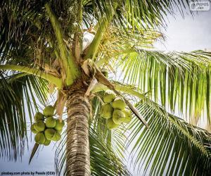 Puzle Um coqueiro