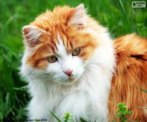 Puzle Um gato elegante