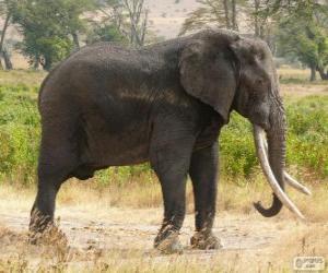 Puzle Um grande elefante