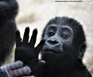 Puzle Um macaco curioso